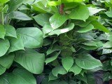上海绿植办公室内外绿植租摆 免费养护配送