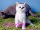 哪有卖布偶猫折耳猫的价格超低