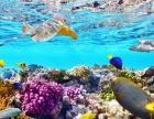 金吉列留学告诉你,这个夏天和澳大利亚海边更配哦