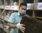 东莞灭虫公司 白蚁防治 杀虫灭鼠彻底清除