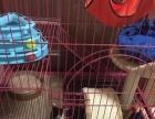 全新双层猫笼猫别墅