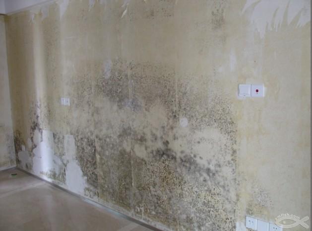 南京浦口江浦房屋墙面维修翻新,开裂,掉粉,发霉,渗水,涂鸦