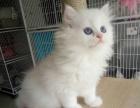 广州布偶猫怎么卖的广州最好的布偶猫要多少钱广州哪里有猫舍