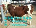 肉牛养殖场招募合伙人 山东晨发牧业肉牛养殖基地