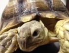 宝宝乌龟,吃菜,还有嗨龟