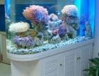 观赏鱼搬家 清洗鱼缸有优惠 观赏鱼租赁 鱼缸清洗