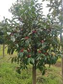 供应萍乡有品质的江西生态农业种子|花卉租摆绿植租摆养护价位
