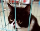 可爱猫猫领养