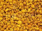 供应花粉 蜂花粉 油菜花粉