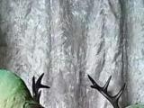 亚历山大鹦鹉小绯胸鹦灰鹦鹉折中鹦鹉岀售