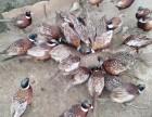 萍乡特种养殖分店,对外供应各类珍禽
