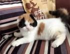 广州哪里有最正规最大的宠物店,我想养只折耳猫
