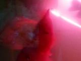 出鹦鹉鱼,麒麟鹦鹉