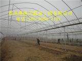 山东简易蔬菜养殖连栋大棚造一亩多少钱郑州博纳川