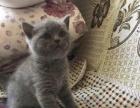 蓝猫最后一小公找新家