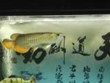 出售观赏鱼和鱼缸
