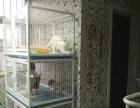 营业中的70平宠物店转让,可空租,适合多中行业经营