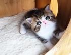 家养加菲 布偶 美短 英短 等猫咪,喜欢的可以上门挑选哦