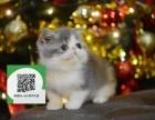 济南在哪里卖健康纯种宠物猫 济南哪里出售加菲猫