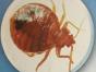 白蚁防治服务-南中专业团队-白蚁防治见效快