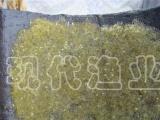 安徽沙塘鳢鱼苗