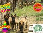 哪里出售马犬 纯种马犬多少钱