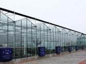 连栋温室价格详情-专业的连栋温室推荐