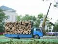 诚信专业修树伐树移树