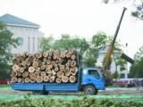 专业修树伐树移树 京福