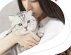 今天下单包邮 宠物小猫咪异短加菲猫活体幼猫纯种加菲
