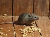 嘉兴海宁市学校单位灭鼠白蚁防治灭蟑螂除四害