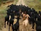 重庆哪里有屠宰场(杀羊的)