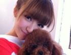 良心犬业丨卖健康宠物丨巨型阿拉斯加犬丨签协议包活 优惠多多