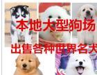 郑州本地狗场出售各种世界名犬疫苗齐全包健康