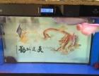 观赏鱼金龙银龙