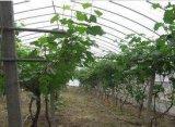 葡萄专用膜厂家直销优惠的葡萄专用膜哪里有
