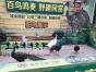 2017新颖百鸟展出租创意百鸟园搭建鹦鹉表演方案