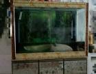 观赏鱼带鱼缸一起出售!