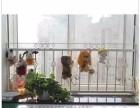 青浦区铁艺楼梯扶手 铁艺栏杆 围栏油漆翻新 专业 质量