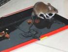 许昌上门杀虫灭鼠,进口药品安全环保彻底摆脱害虫困扰