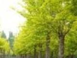 供应甘肃苗木,新疆苗木,西藏苗木,天津苗木,山西苗木,陕西苗木