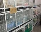 东莞哪里有卖加菲猫价格多少 加菲猫怎么挑选 加菲猫好养吗
