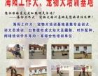 海阳工作犬训练营