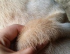 宠物皮肤病特效药7天包见效无效全额退款!兽医推荐