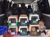 威海正规安全的宠物托运公司