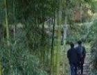 东林镇青山常照寺旁 其他 1100平米