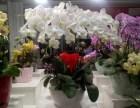 北京花卉租摆公司专业租摆租赁植物