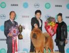 中国登陆冠军松狮后代血统证书可查询