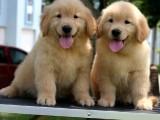 西安官方认证狗狗领养中心 只需身份证实名领养