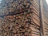 唐山杉木 批发/杉木原木批发 丰润杉木杆